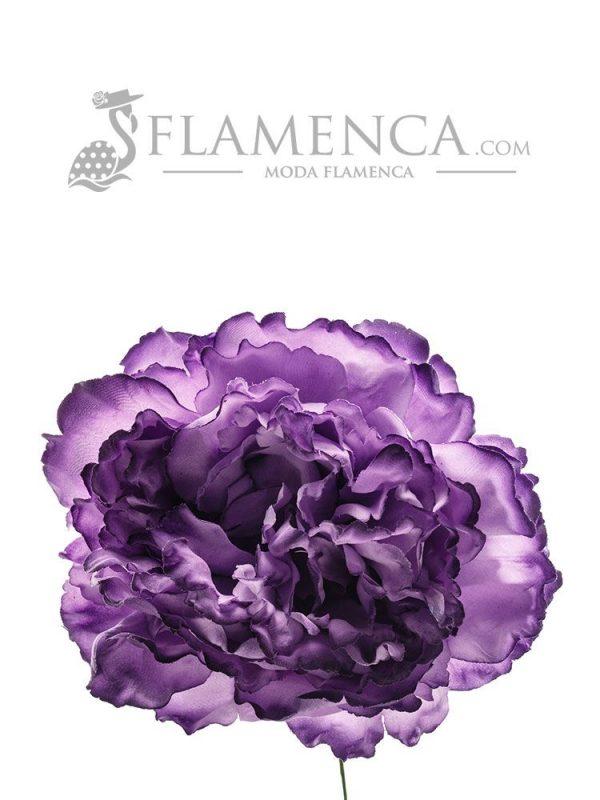 Purple flamenco flower