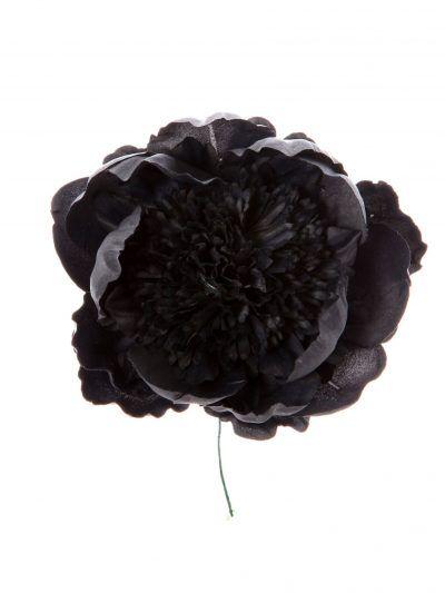 Peonia rizada color negro