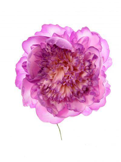 Peonia rizada lila