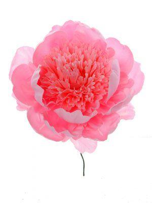 Peonia rizada rosa palo