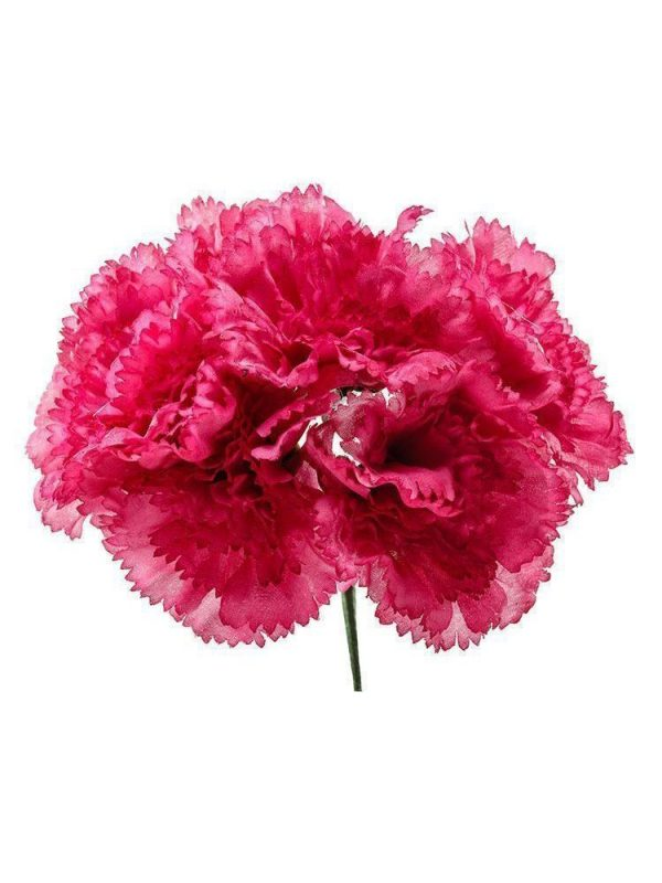 Bouquet of raspberry carnations